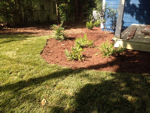 Sod, flower beds, and shrubs
