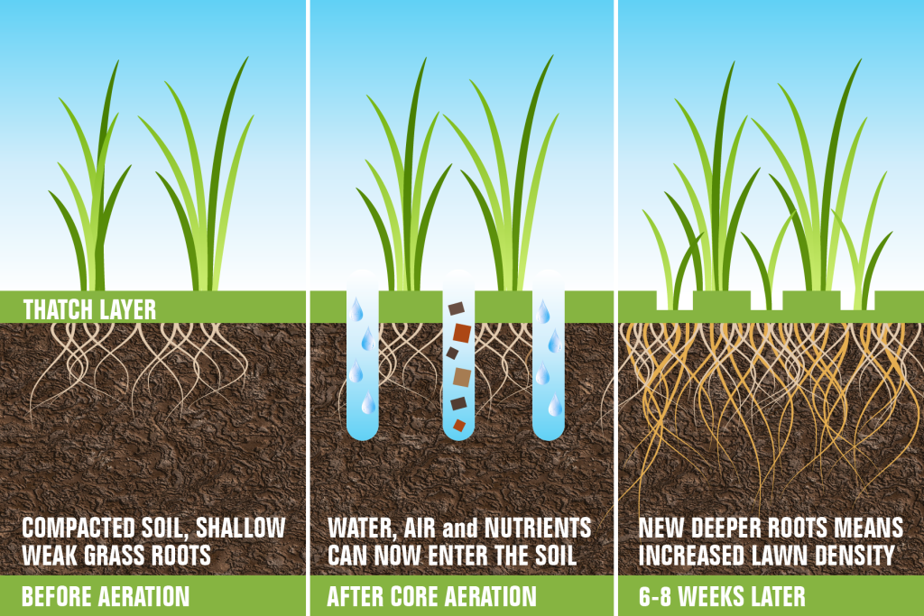 Aeration Overseeding Fertilization Stewart S Lawn