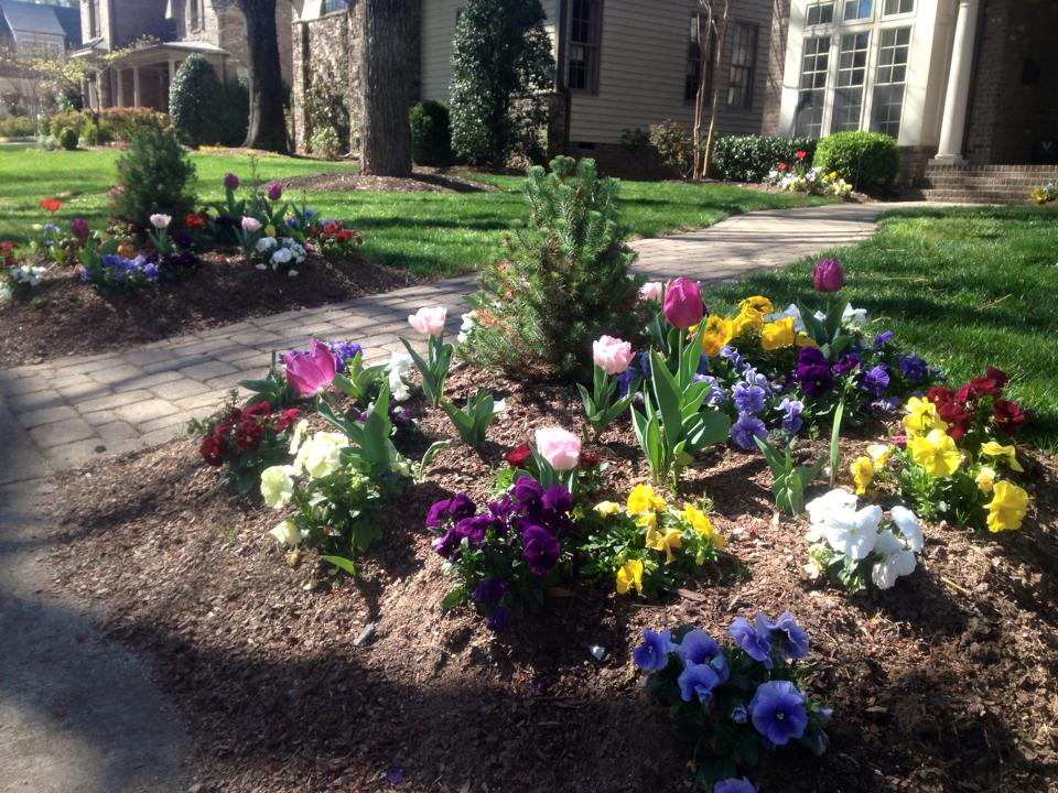 Charlotte premier landscaping stewart 39 s lawn and for Landscaping rocks charlotte nc